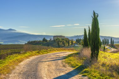 Cypress trees on the road to a farmhouse in the Tuscan landscape