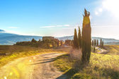Cypřiše na cestě do statku v toskánské krajině