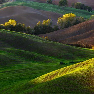 Beautiful spring landscape planted fields