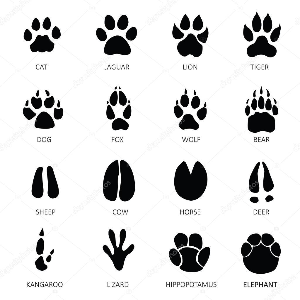 動物の足跡 — ストックベクター © rashad_ashurov #56168479