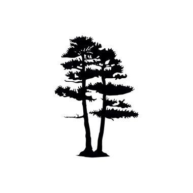 coniferous trees silhouette