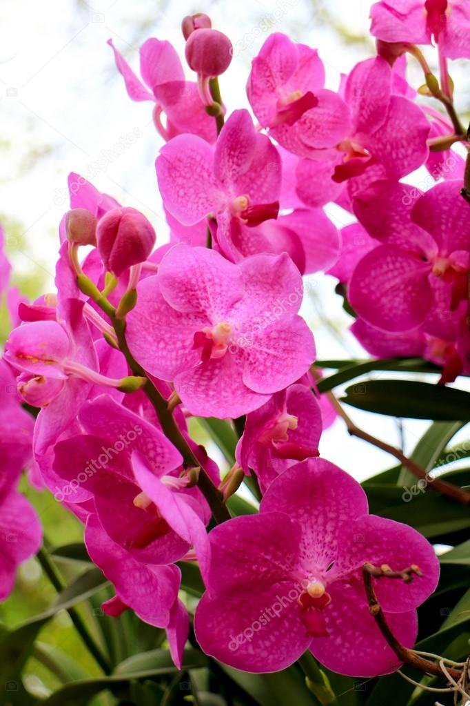 Beautiful Orchids In Tropical Garden Stock Photo