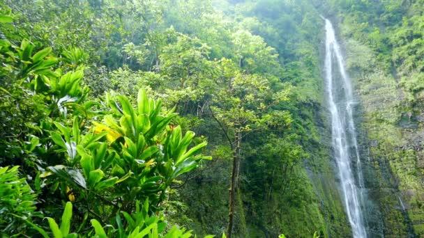 Vízesés Hawaii zöld erdő