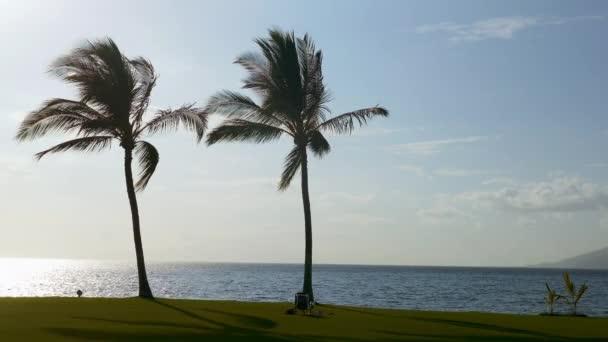 krásné palm beach