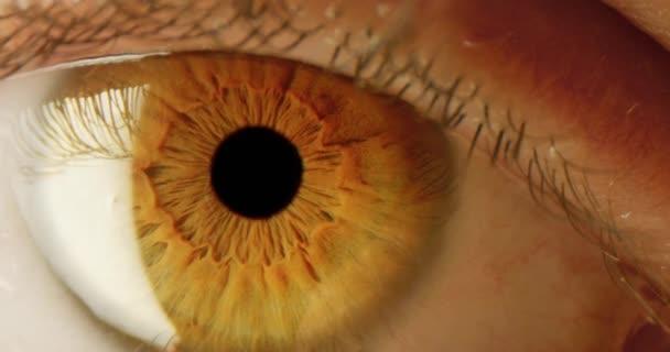 Makro des männlichen Eye Tracking Shot Iris Dilation Dream 8k