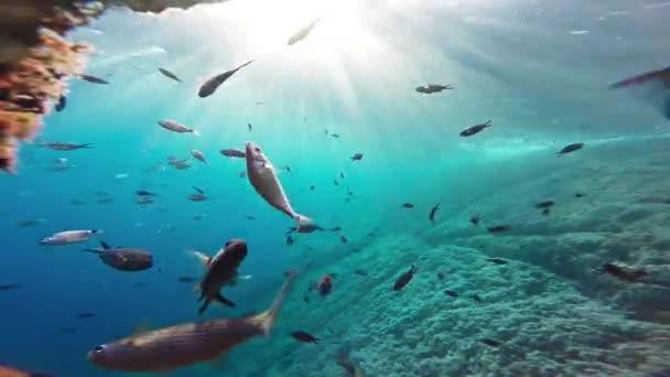 Blue Scuba Aquatic Reef Nature School Deep Diving Animal Wildlife Travel Wild Coral Life Sunlight Background Surface Sun Swimming Fish Underwater Ocean Sea Water Marine Tropical Gopro HD