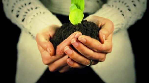 Zelených rostlin nový život v rukou životního prostředí