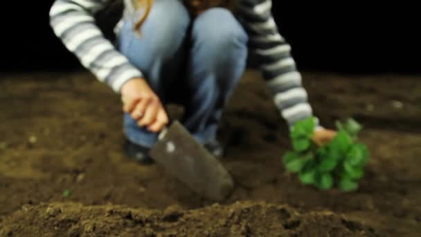 Výsadbu zelených rostlin ekologie koncept Hd