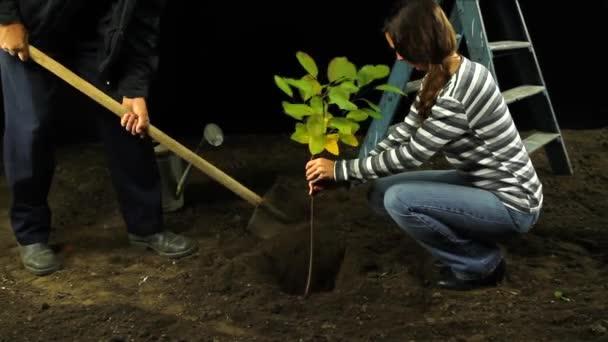 Žena, výsadba stromu ochranu životního prostředí