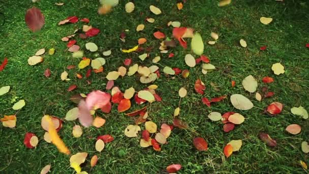 Autumn Leaves Falling On Green Meadow Fall Colors
