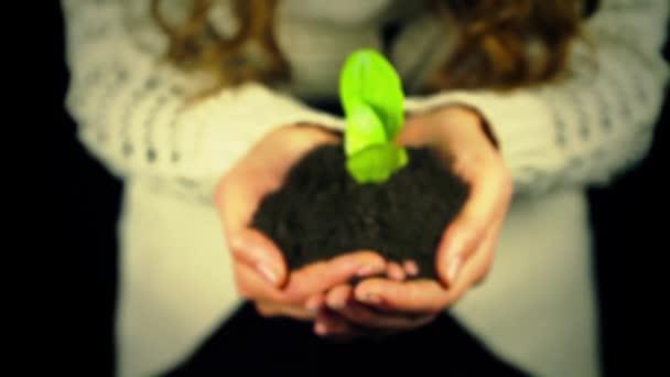руки, що тримає зелених рослин