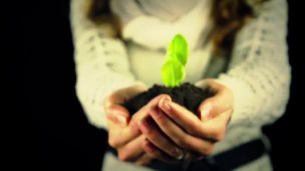 ruce držící zelených rostlin