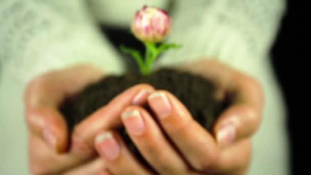 Ruce držící zelený květ rostlin