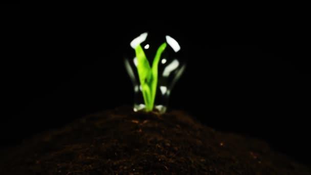 Zelené rostliny uvnitř žárovka