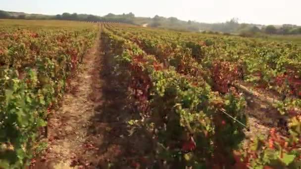 Letecký pohled na vinice údolí