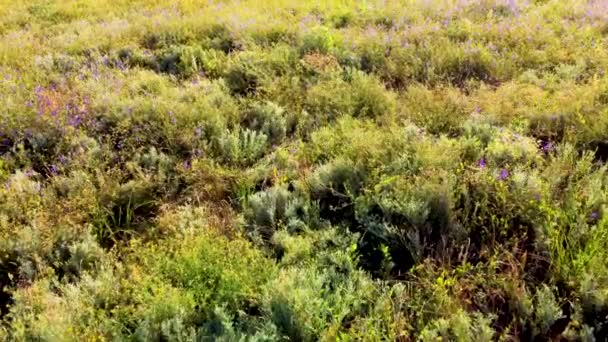 field of medicinal herbs aerial view. video from a quadrocopter