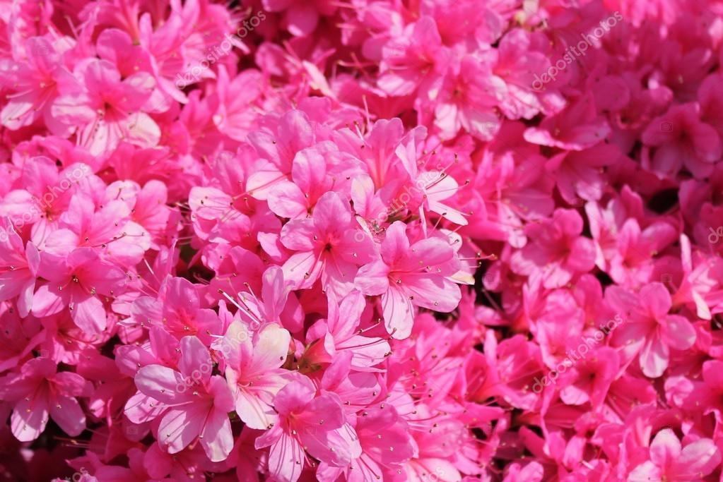 las mejores azaleas para purificar el aire