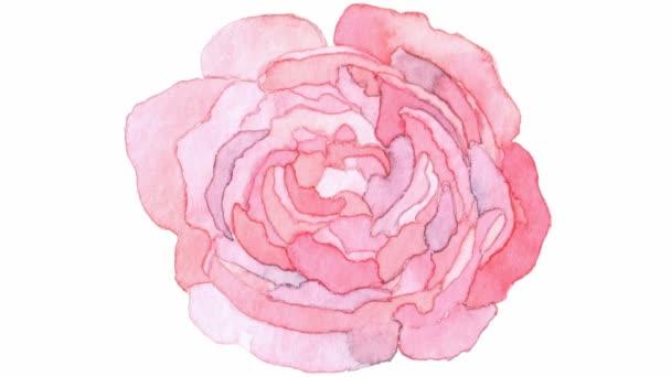 Animált akvarell rózsaszín rózsa. Virág jelenik meg a középső képernyőn. Vektor illusztráció elszigetelt fehér háttér.