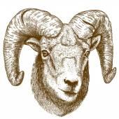 Vektor-Illustration der Gravur Ram Kopf