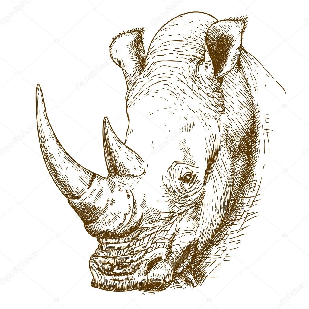 Engraving antique illustration of rhinoceros
