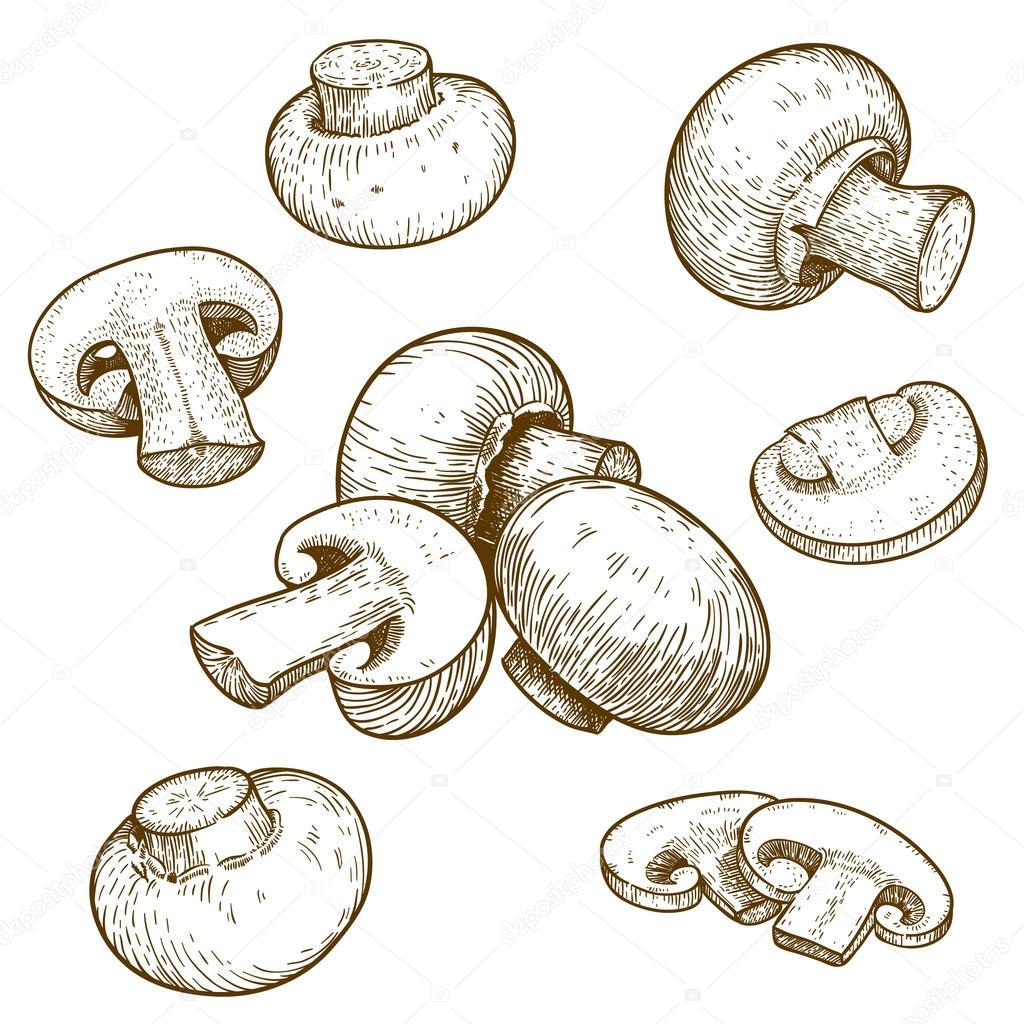 Engraving illustration of mushrooms champignons
