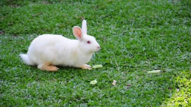 Bílý králík jíst na farmě