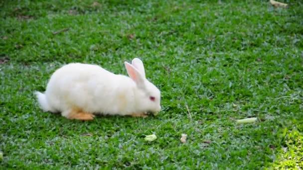 Mladý Bílý králík jíst na farmě