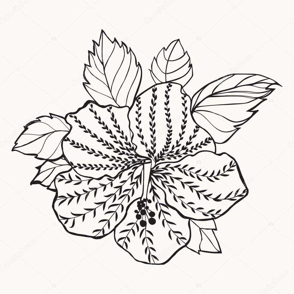 Hawaii Hibiskusblüte, Blatt Abbildung — Stockvektor © margolana ...