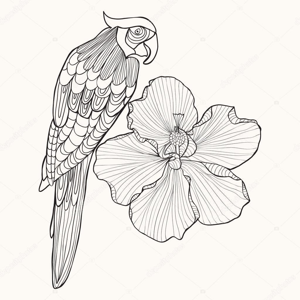 Loro de aves exóticas con hibiscus de flor — Vector de stock ...