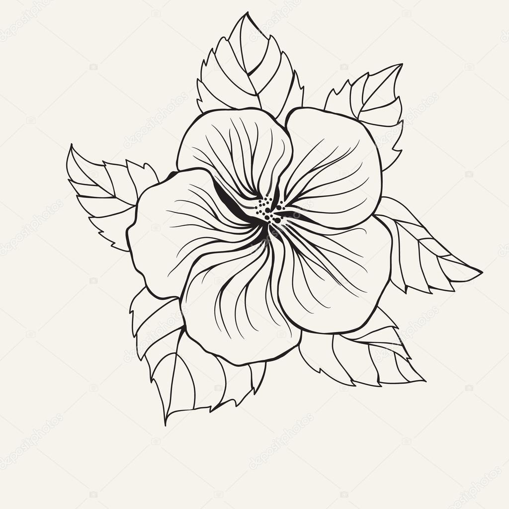 disegni da colorare fiori hawaiani