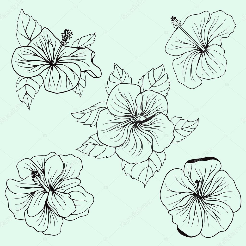 Coloriage Fleur Hawai.Ensemble De Feuilles Fleurs D Hibiscus Hawai Image Vectorielle