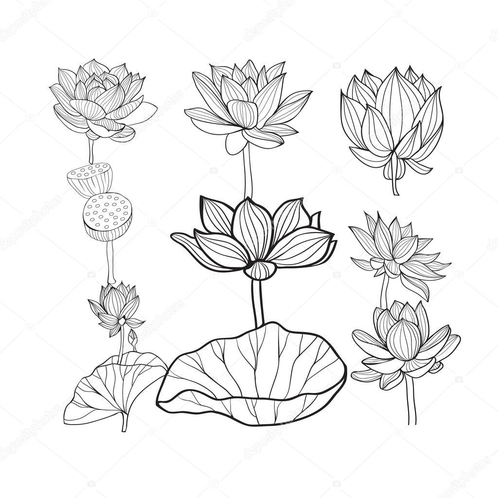 Vector Set Of Beautiful Monochrome Hand Drawn Lotus Flowers And