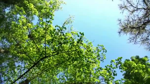 Koruny stromů s odpolední slunce