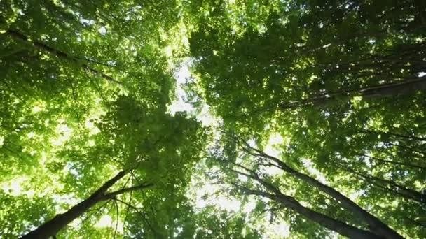 A fák az erdőben, és fényes délutáni nap sugarai koronák