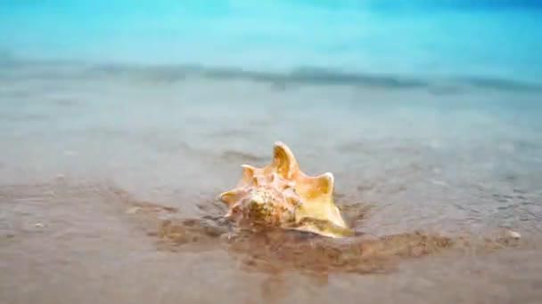 Mušle na pláži písek oceán ve světle slunce s vlny pozadí