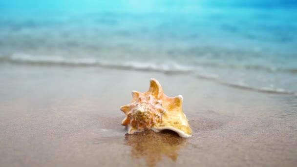 Lassított film seashell homok ocean Beach hullámok nap fényében