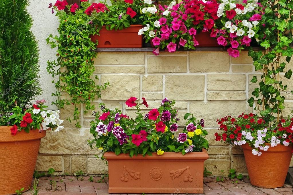 Muchas Macetas De Barro Con Plantas Floreciendo En El Muro De Piedra