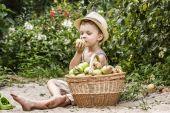 Dítě v zahradě s košem jablek