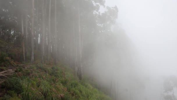Foresta nebbiosa del faggio sul pendio della montagna