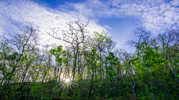 hluboké hustý les s paprsků zářící
