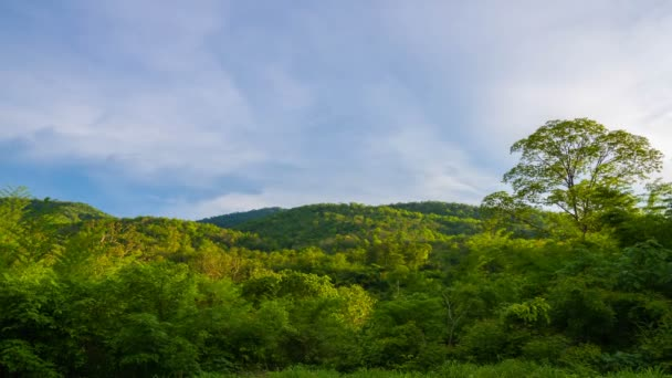 The jungles view