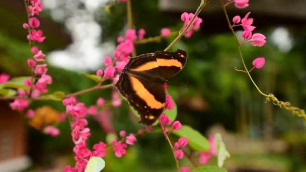 Zöld erezett fehér pillangó lila őszinteség Wild Flower
