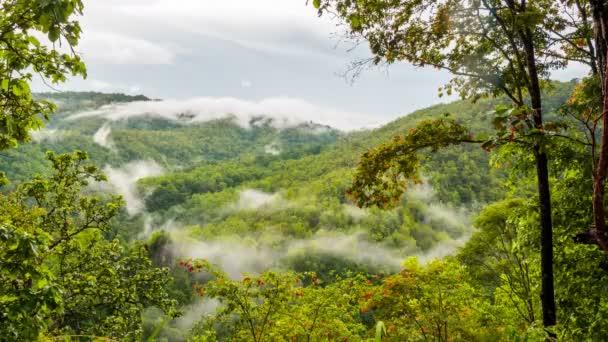 Nebbia di mattina nella fitta foresta pluviale tropicale, Misty montagna foresta nebbia