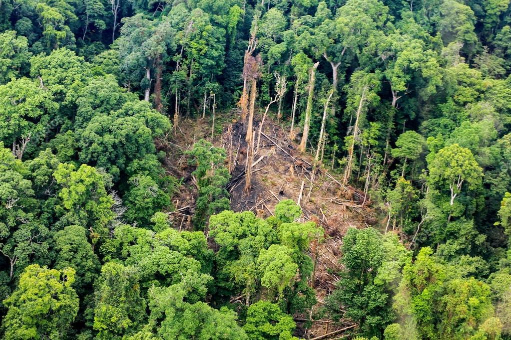 Luftbild Der Geschnittenen Baume Am Boden Im Regenwald Stockfoto