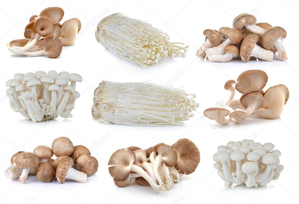 Enoki Pilze Kaufen