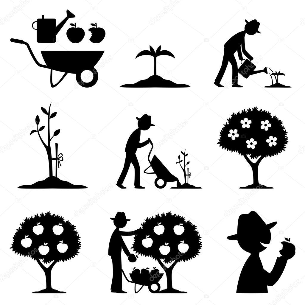 Farmer and apple harvest