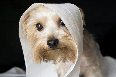 Mischivous dog