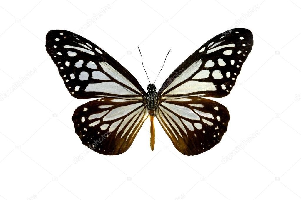 colorful butterfly isolated on white — Stock Photo © aodaodaodaod ...