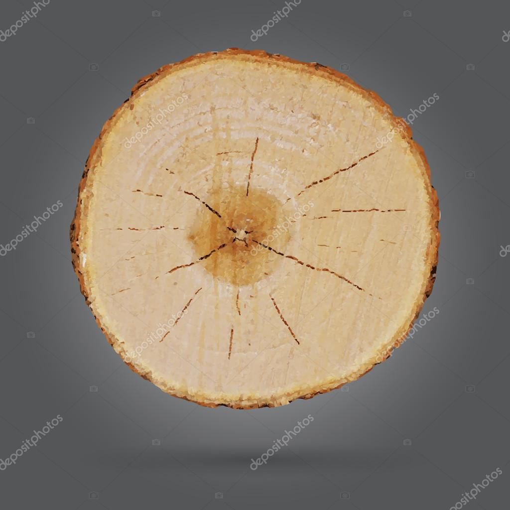 Tree stump isolated on gray background