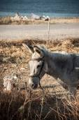 Photo Grey donkey in field